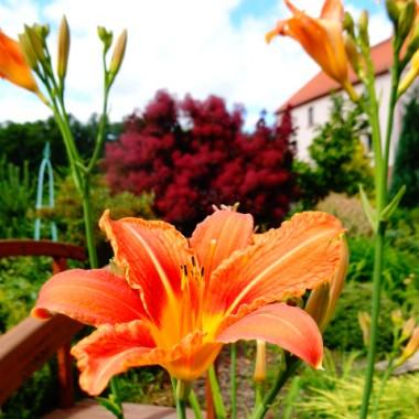 Paleta barw w letnim ogrodzie