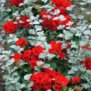 Kwiaty kwitną bardzo fajnie nawet w lasku:)
