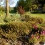 Ogród, Wiosenna odsłona ogrodu