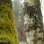 Leśne klimaty, MCHY I POROSTY