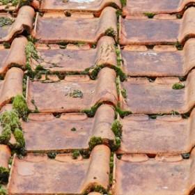 Jak zapobiegać powstawaniu i skutecznie usuwać mech z dachówek?