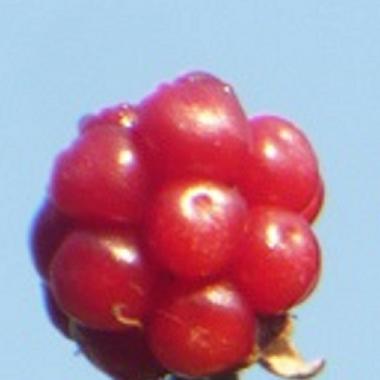 ..................jesienią owoce się czerwienią..........