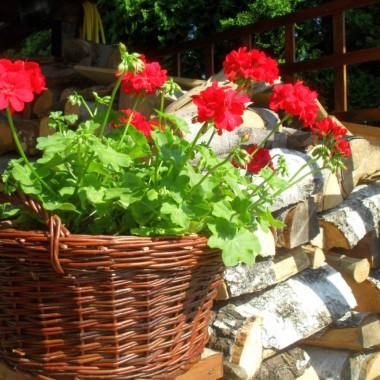 Uroki czerwcowego ogrodu :)