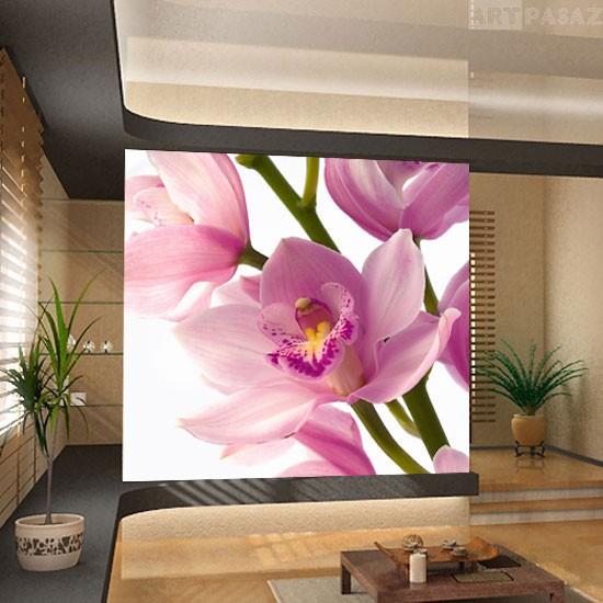 Pozostałe, fototapety kwiaty - tapeta z różową orchideą