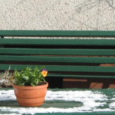 wiosna w sniegu