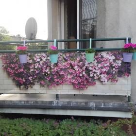 Balkon w tym roku...Surfinie