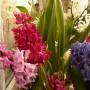 Dekoratorzy, Czekając na wiosnę .................. - .................i kolorowo mi.............