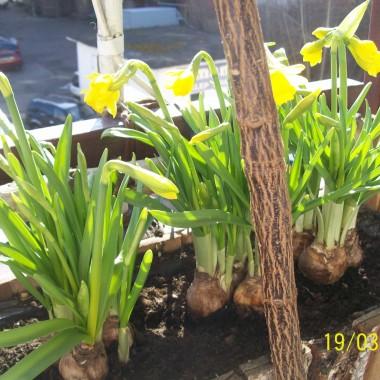 Pierwsze kwiaty na balkonie.