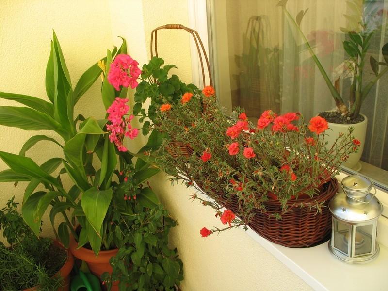 Balkon, Kolorowe lato - Koronawirus minie a na balkon powróci lato. ------- alejak.pl