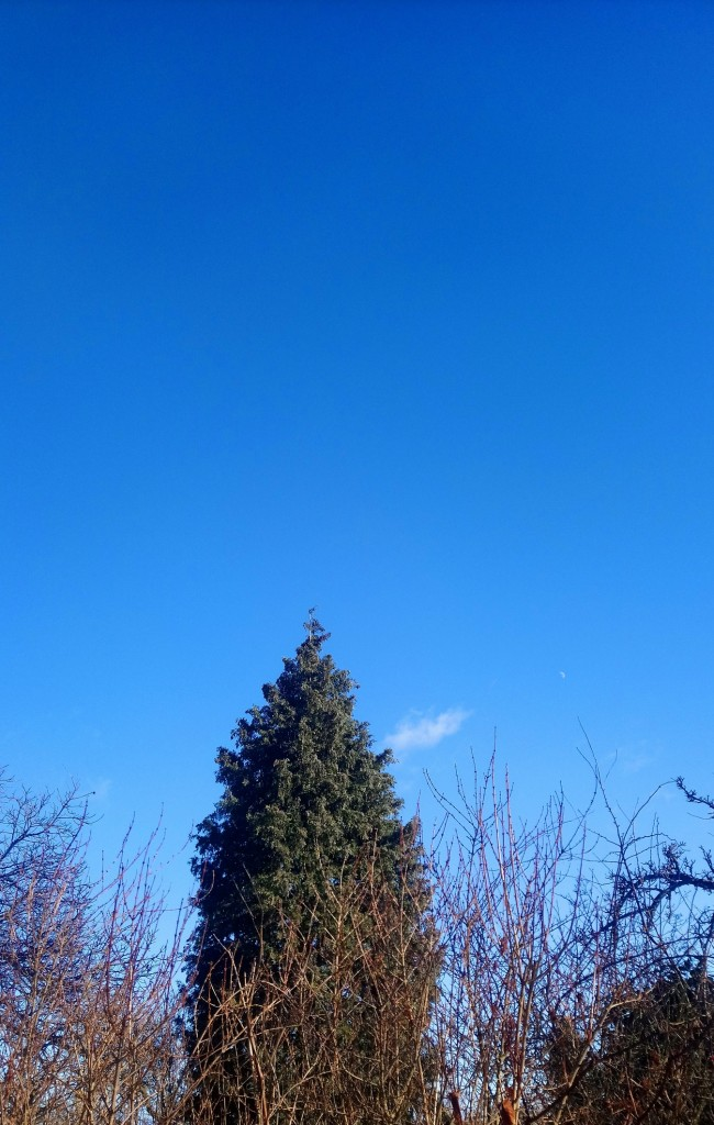 Dekoratorzy, Czekając na wiosnę .................. - ...............i błękitne niebo...................