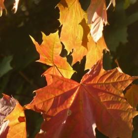 Jesień.................