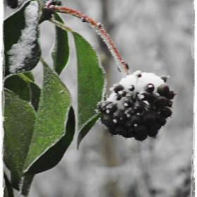 Zimowy sen natury &#x3B;