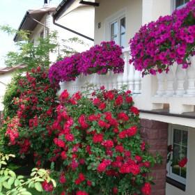 Mój maleńki ogródek, kiedyś...
