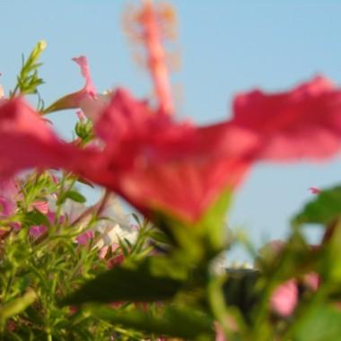 Lato trwa....................gorące ...............prawie tropikalne...............ale widać już pierwsze oznaki jesieni....................Dolina Mimozy znów rozkwitła .................w dzisiejszej galerii ................kwiaty lata ............i ulubione datury..................w końcu zakwitły ...............oraz letnie haftowanki .........zapraszam :)