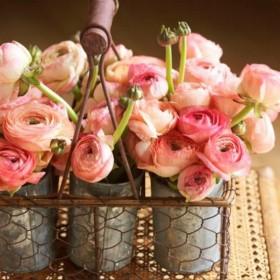 kwiaty są wśród nas
