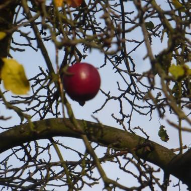 ..................i jabłuszko............