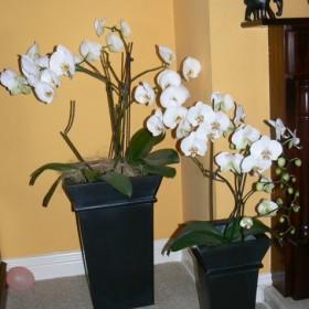 Moje kwiaty!