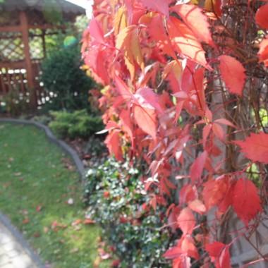 ogród w jesiennych barwach i domowe klimaty