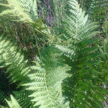 Natura, las, roślinność