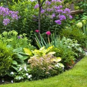 10 roślin, które wyrosną w cieniu