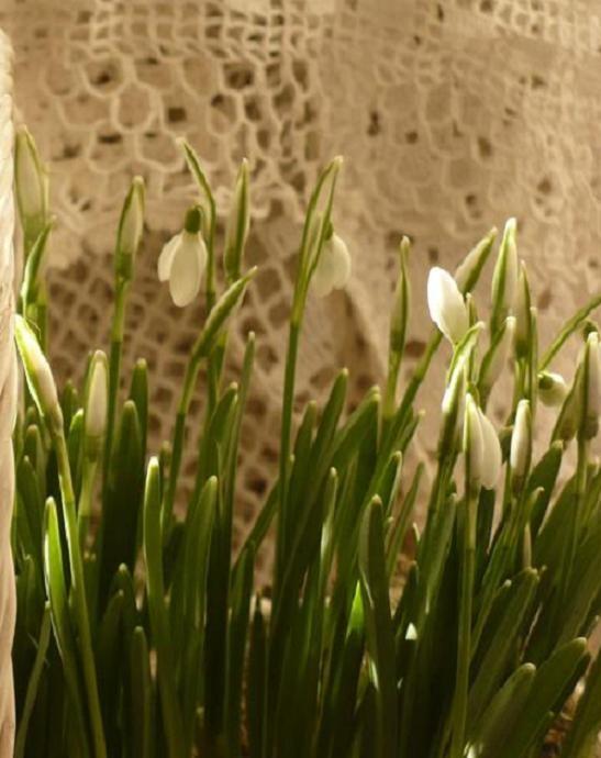 Dekoratorzy, Czekając na wiosnę .................. - ......................i przebiśniegi.................