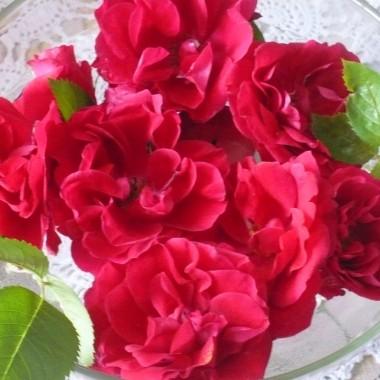 ..................i róże.....................