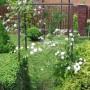 Pozostałe, rośliny latem 2013 r.