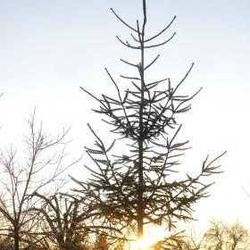 Wesołych Świąt życzę Wam ..................