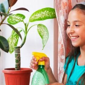 Jakie kwiaty do pokoju dziecięcego?