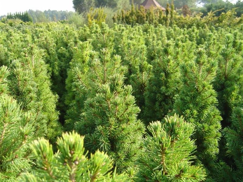 Rośliny, ogród 2 - jeszcze mały las