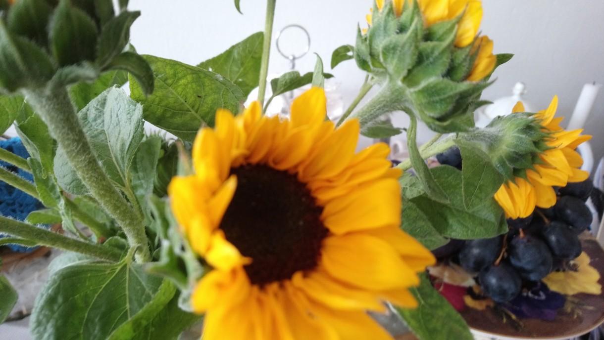 Rośliny, Wrześniowe fotki.................... - .............i słoneczniki..............