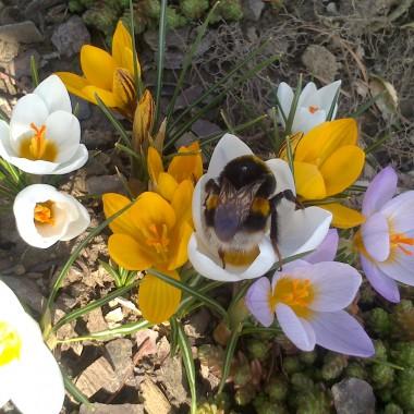 nareszcie wiosna :)