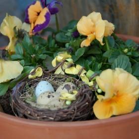 Gdzie kwitnie kwiat - musi być wiosna.....