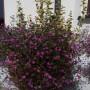 Pozostałe, I żeby nie było, że lato u mnie bez kwiatów...