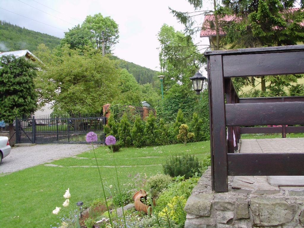 Ogród, Majowo-czerwcowy ogród Ewy - Przerośnięty  czosnek.