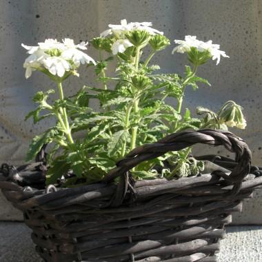 Moje rośliny.....