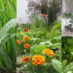 W majowym deszczu i czerwcowym słońcu.