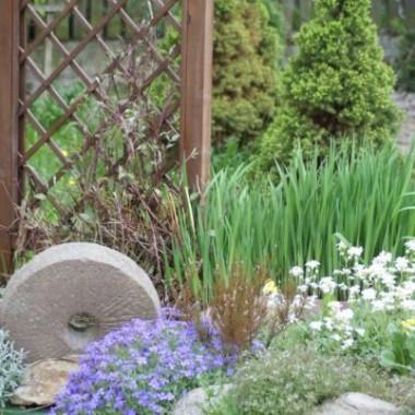 Roślinki z mojego ogrodu