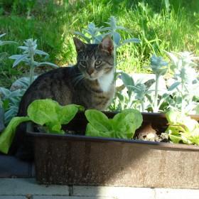 Ogród !!to brzmi ...za dumnie, ale zapraszam