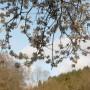 Pozostałe, Kwietniowa .........wiosenna...........błękitna.......... - ...............i polana.......... widok z sadu...........