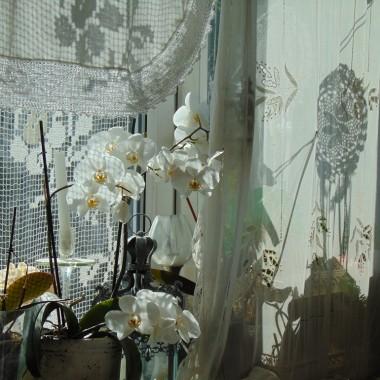 ................i kwiaty na oknie...........