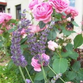 Mój letni ogród:)