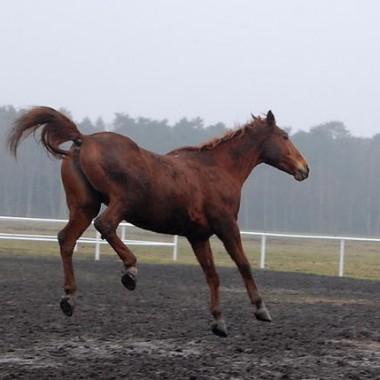 Moja miłosc Konie!!!