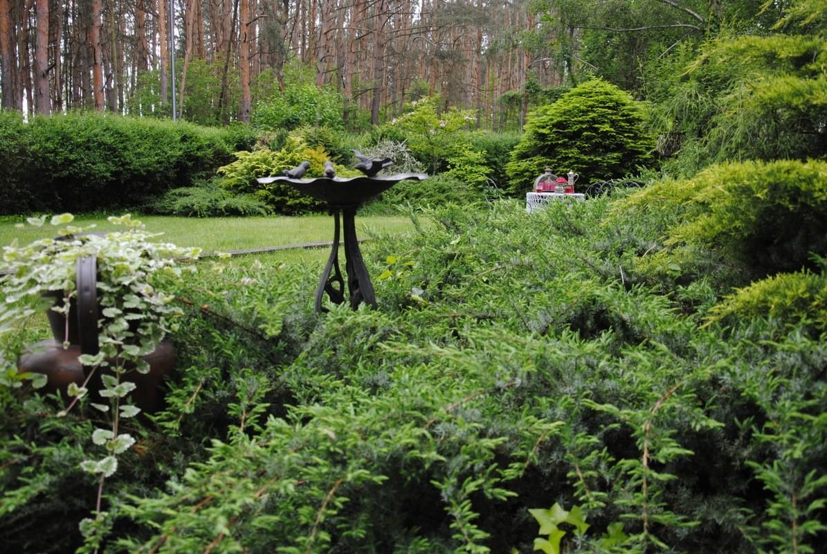 Ogród, W zielonym majowym lasku :)