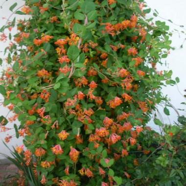 Moje rośliny od sadzonek pielęgnowane