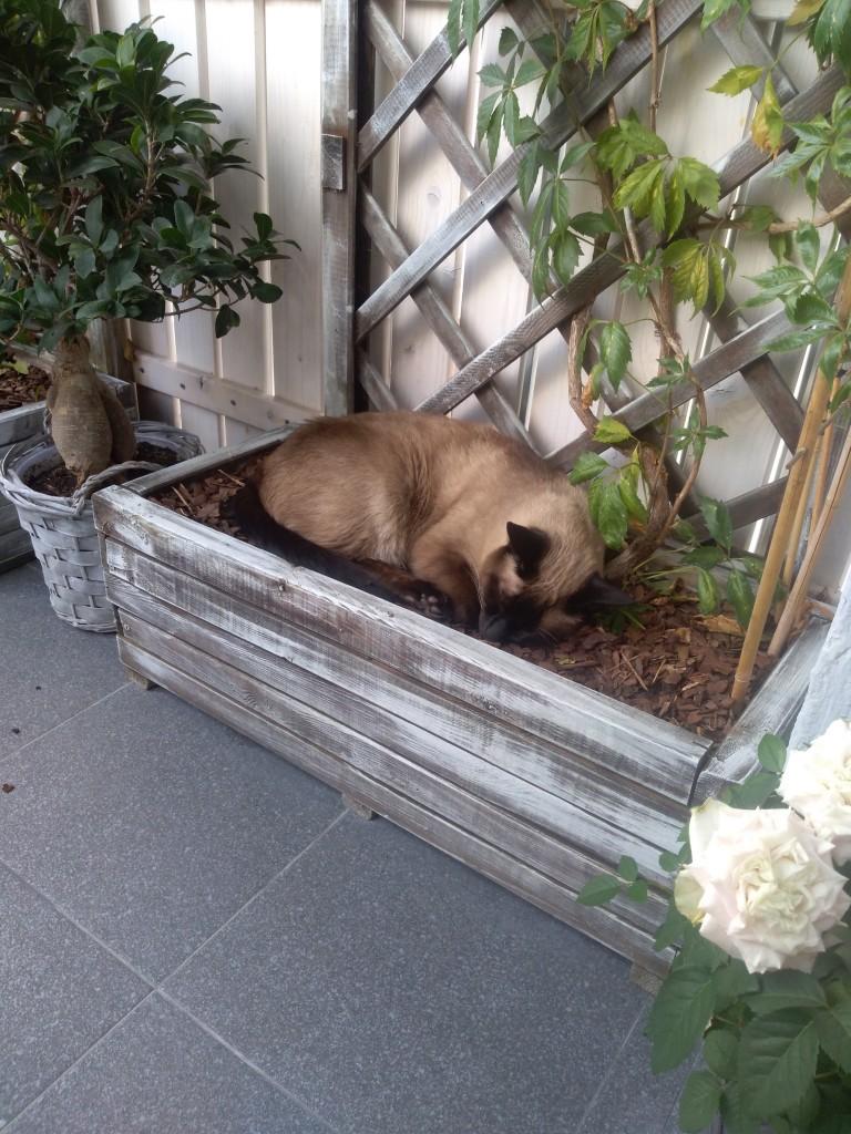 Balkon, A lato powoli mija :(