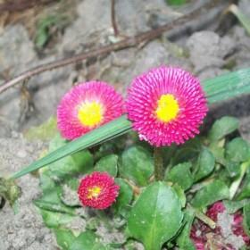 mały ogródeczek