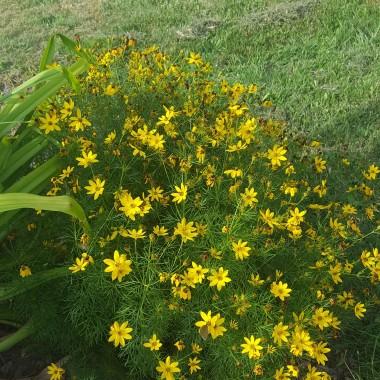 Dzisiaj w moim ogrodzie pomimo upału zrobiłam kilka zdjęć . Zapraszam do oglądania.