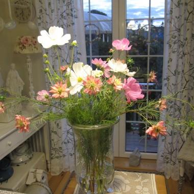 Moje ulubione kwiatki z ogródka :)
