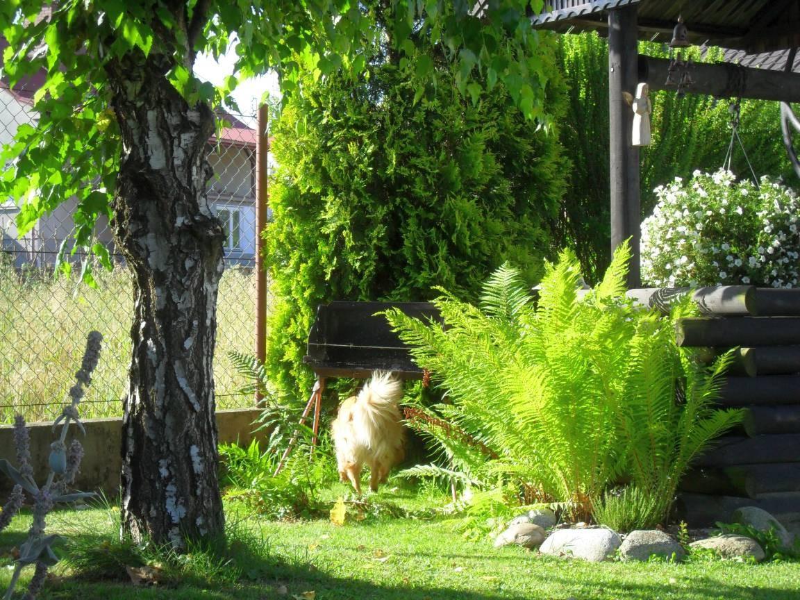 Pozostałe, Lipcowy ogród w lipcowym słońcu :)